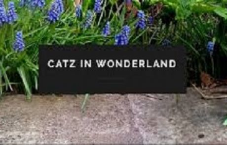 Catz In Wonderland Sweepstakes
